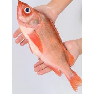 塔斯曼 新西兰红石斑鱼  2条装 规格:700-800g/条 X2条