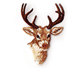 Deer Products (4)
