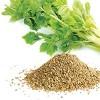 Celery (4)